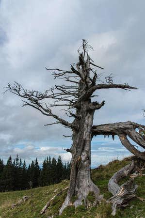 High latitude dead tree.