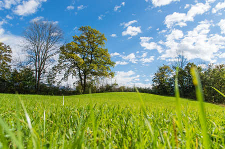 Green field and trees under blue sky. photo