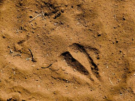 arid climate: A Giraffes Footprint in Desert Sand