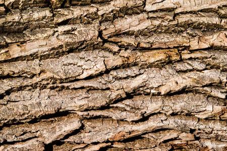 animal limb: A Tree bark texture background