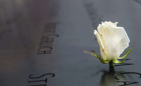 White Rose left at the National 9/11 Memorial at Ground Zero. The flower commemorates the birthday of a victim of the attacks of 2001 in Lower Manhattan on April 26, 2014. Редакционное