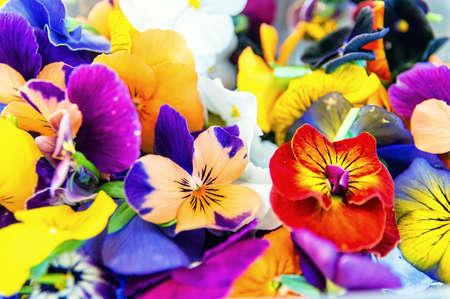 edible flowers background, texture Foto de archivo