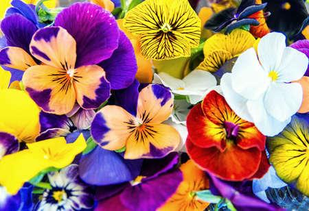 edible: edible flowers background, texture Stock Photo