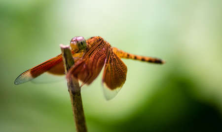 clinging: The photo shows a closeup of a dragonfly clinging to a twig