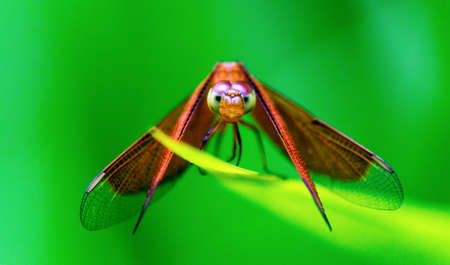 Extreme Close Up of a Dragonfly looking into the camera photo