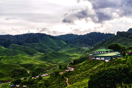 famous industries: Tea plantation in Cameron highlands, Malaysia