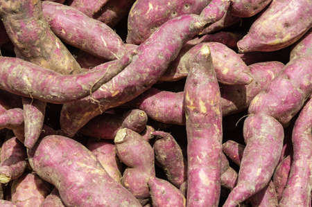 recently: recently harvested sweet potatoes, Food Background Stock Photo