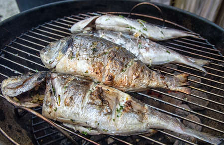dorade: Dorade fishes on the barbecue Stock Photo
