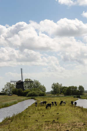 dutch typical: Typical Dutch Landscape with farm animals and windmill Stock Photo