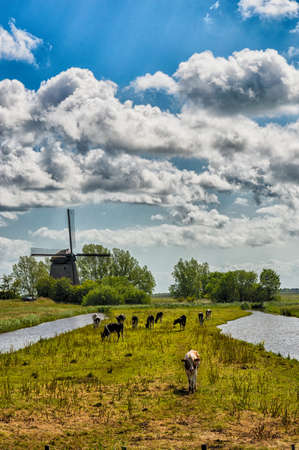 Typical Dutch Landscape with farm animals and windmill photo
