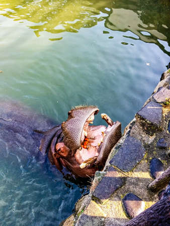 carved letters: A happy hippopotamus at a Zoo in japan Stock Photo