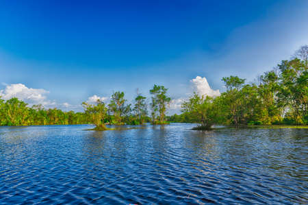 midst: Trees in the midst of the waters of Matapica Swamp under a blue sky