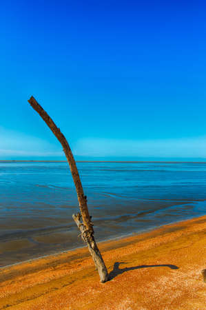 toter baum: Dead tree part on coast with clear blue sky Lizenzfreie Bilder