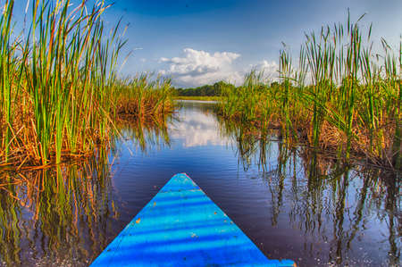 swamps: Travelling by boat through Matapica Swamps in Suriname,South America
