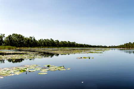 suriname: Matapica Swamps in Suriname,South America