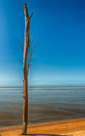 toter baum: Toter Baum Teil an der K�ste mit klaren blauen Himmel Lizenzfreie Bilder