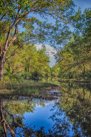 swamps: Matapica Swamps in Suriname,South America