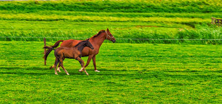 synchronously: Mare and Foal running in green pasture