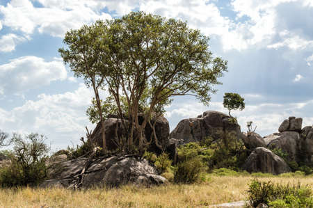 rock formation: rock formation called Kopjes in the Serengeti (Tanzania)
