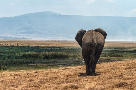 handcarves: Taken At Serengeti National Park, Tanzania