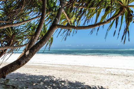 palmier: A deserted beach on the tropical island of Zanzibar