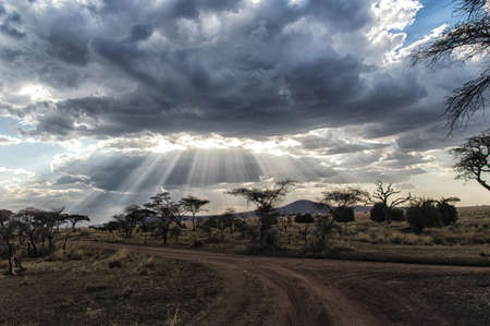 tanzania: Africa, Tanzania Serengeti National Park sunset Stock Photo