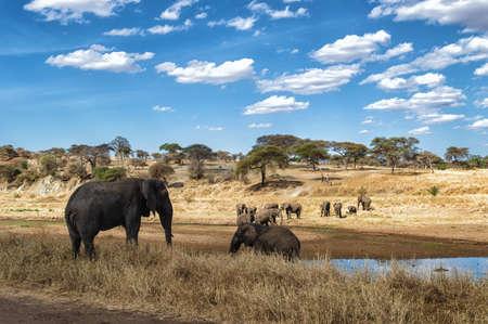 waterhole: Elephant Herd at a waterhole in the Serengeti nature reserve, Tanzania