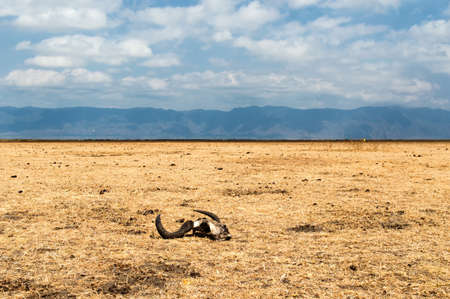 Serengeti national park, savanna with Skull