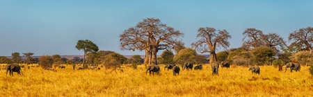 east africa: Elephant Herd walking in the Serengeti, Tanzania