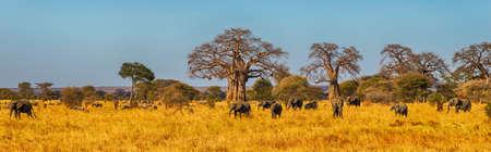 Elephant Herd wandelen in de Serengeti, Tanzania Stockfoto