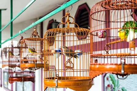 Birds in cages for sale at Birds market, Kowloon Hong Kong, popular tourist destination. Фото со стока
