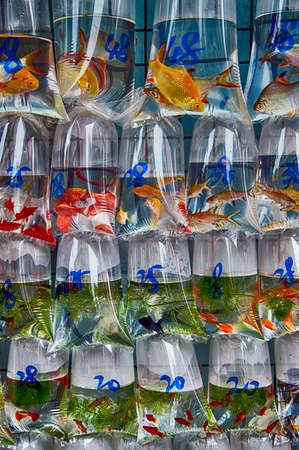 gulp: Famous Fish market in Hong Kong, China Stock Photo