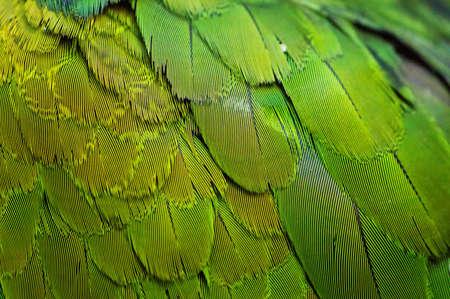pluma: textura de fondo de colores Guacamayo Plumaje Foto de archivo