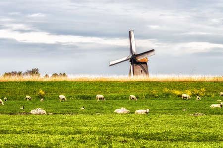 schermerhorn: Windmill in bright sunny conditions near Schermerhorn, Netherlands. Grazing sheep on the meadow.