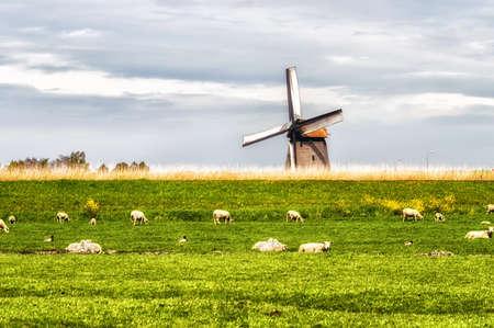 schermerhorn: Windmill in bright sunny conditions near Schermerhorn, Netherlands. Grazing sheep on the meadow.