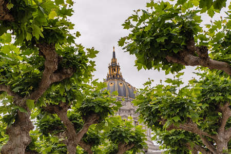 san fran: San Francisco City Hall Dome detail as seen through tree canopy