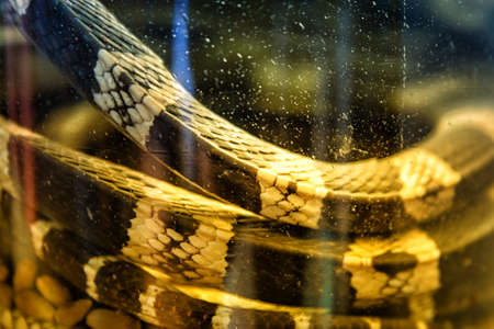 Close Up of a Glass jar with alcohol tincture on poisonous snakes