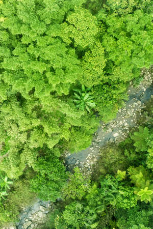 geoforest: Small stream in the dense jungle as seen from above.