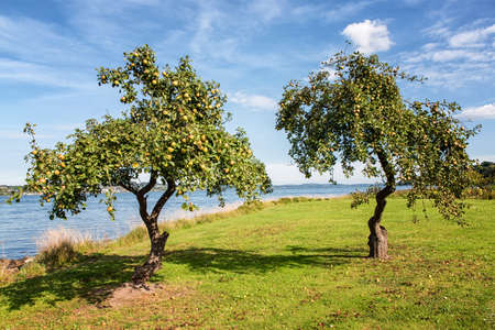 Apple tree in spring with a lake in the background