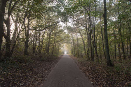 road and path through: Road path walkway through autumn forest. Stock Photo