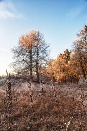 Dutch Winterlandscape with tall Evening Primrose Seedpods, Wheat and Sunrise Stock Photo