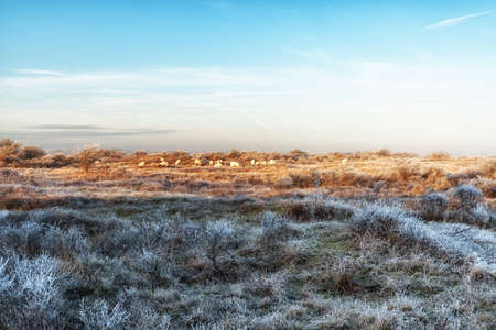 A Typical Dutch Landscape near the coast, with grazing sheep in the distance Stock Photo