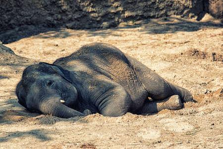 Jonge olifant die in de zon ligt Stockfoto
