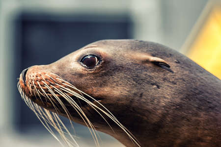 Close-up portrait of a Sea lion