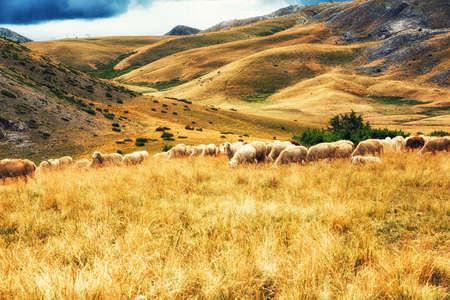 Kudde schapen op de vlaktes van het nationale park van Mavrovo, Macedonië Stockfoto