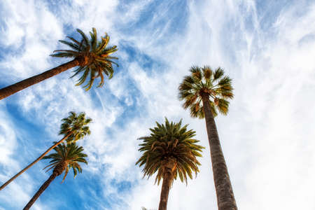 upward view of palm trees against blue sky Stock Photo