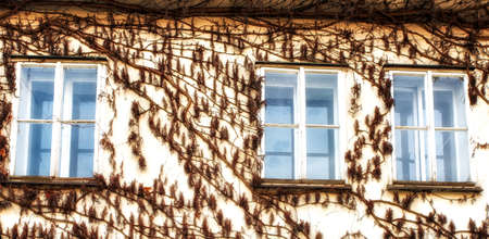 prague, Czech Republic - April 04: Wall and window covered with vines