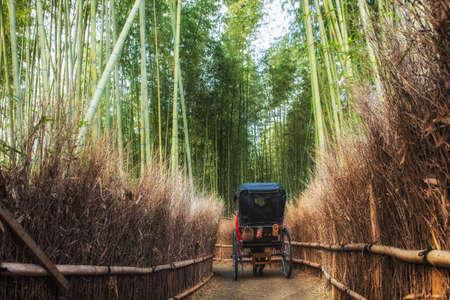 A rickshaw trip inside the bamboo grove. Stock Photo