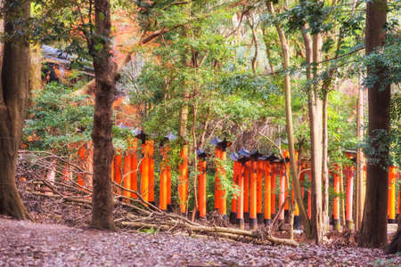 Kyoto, Japan - December 28, 2018: Fushimi Inari shrine tunnel seen from the forest.