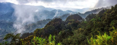 Tropical rainforest of Nyungwe National Park,Rwanda.